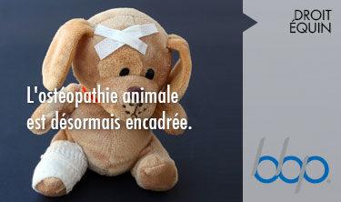 Ostéopathie animale désormais encadrée