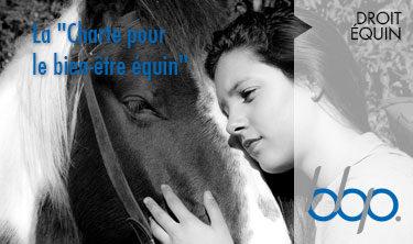 Charte pour le bien-être équin - BBP Avocats droit équin